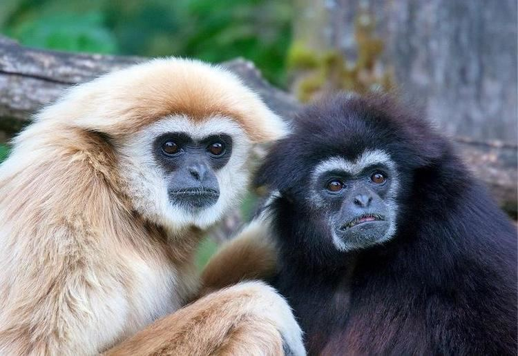 Haplorhini Primates Biology 447 with Rogers at Brigham Young University