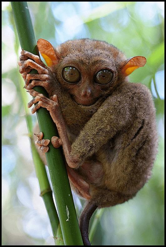 Haplorhini Order Primate Suborder Haplorhini at University of Central Florida