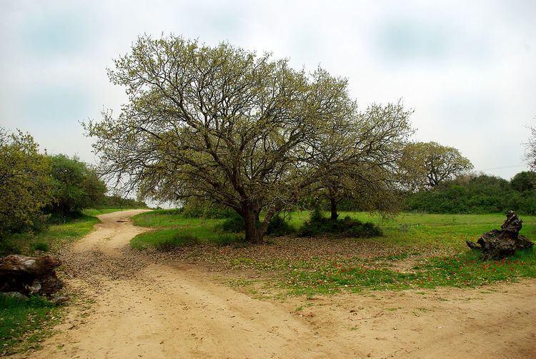 HaSharon Park