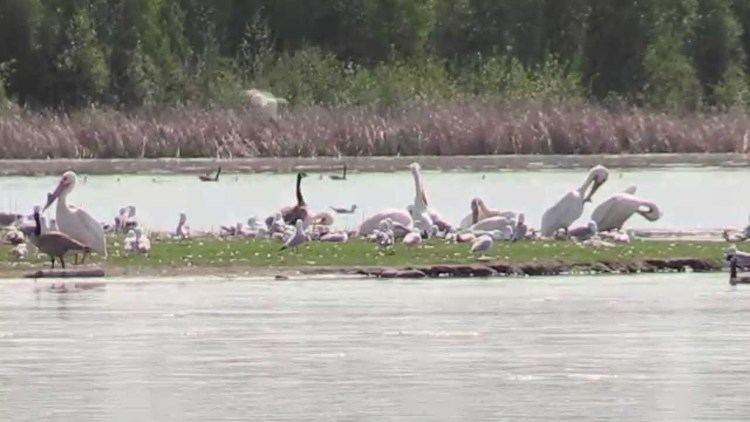 Hasse Lake (Alberta) httpsiytimgcomviHwIA40SzQmaxresdefaultjpg