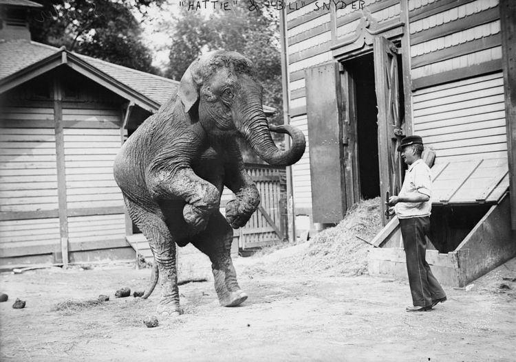 Hattie (elephant)