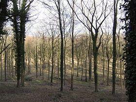 Head Down, Hampshire httpsuploadwikimediaorgwikipediacommonsthu