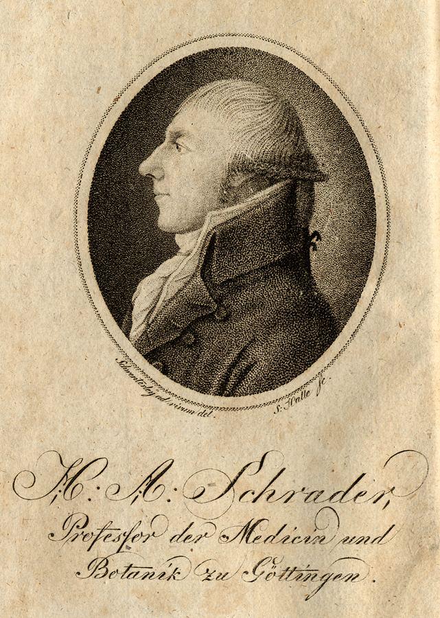 Heinrich Schrader (fencer) Heinrich Schrader botanist Wikipedia