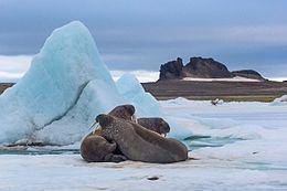 Heiss Island httpsuploadwikimediaorgwikipediacommonsthu