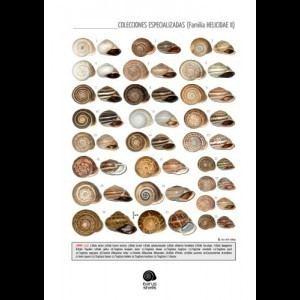 Helicidae Plate 112 Family Helicidae II IBERUS SHELLS