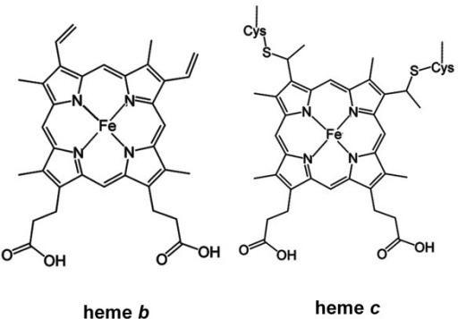 Heme B Chemical structures of heme b and heme c Openi