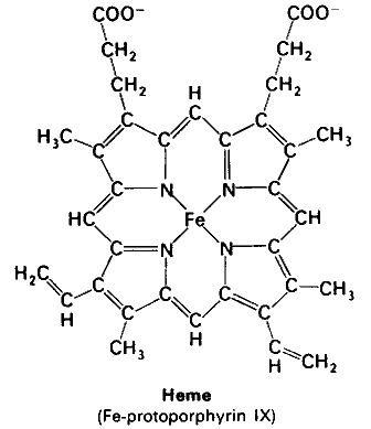 Heme Structure of Heme