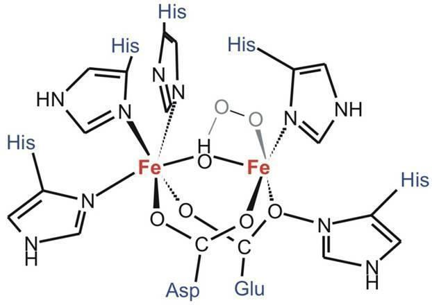 Image result for hemoerythrin structure