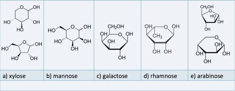 Hemicellulose 623 Hemicellulose EGEE 439