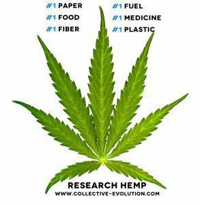 Hemp How Hemp Became Illegal The Marijuana Link Collective Evolution