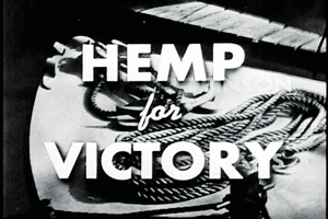 Hemp for Victory The Crash Report Hemp For Victory