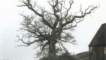 Henri Gadeau de Kerville Les vieux arbres de Normandie Henri Gadeau de Kerville