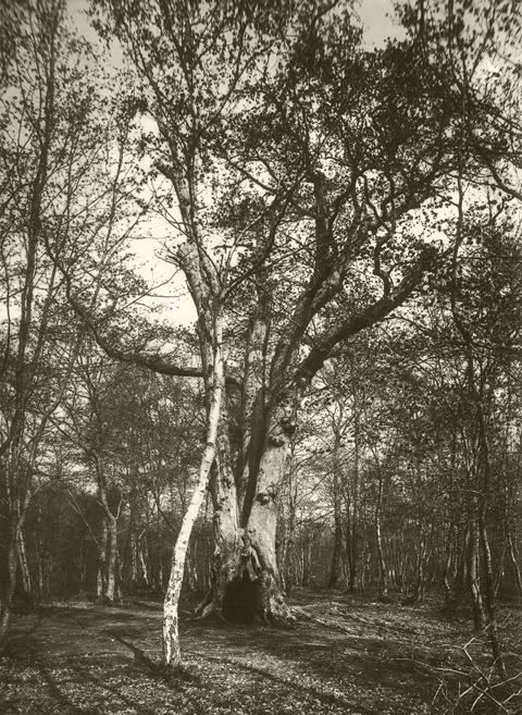 Henri Gadeau de Kerville henri gadeau de kerville l39amour des arbres