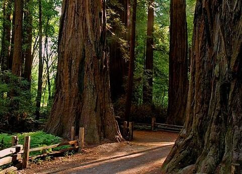 Henry Cowell Redwoods State Park Henry Cowell Redwoods State Park Wikipedia