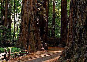 Henry Cowell Redwoods State Park httpsuploadwikimediaorgwikipediacommonsthu