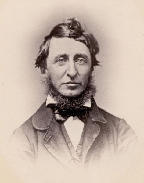 Henry David Thoreau Harvard University Herbaria Botany Libraries Archives