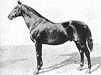 Henry of Navarre (horse) httpsuploadwikimediaorgwikipediacommonsthu