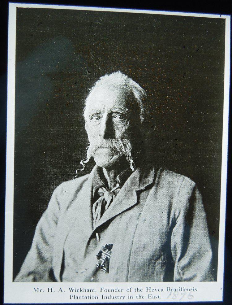 Henry Wickham (explorer) BioPirate Henry Wickhams Audacious Brazilian Rubber Removal