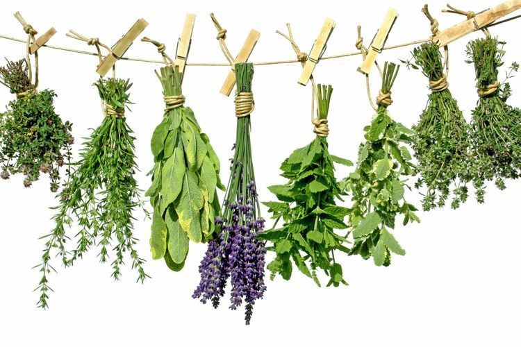 Herb 10 Herbs for Headaches The Luxury SpotThe Luxury Spot