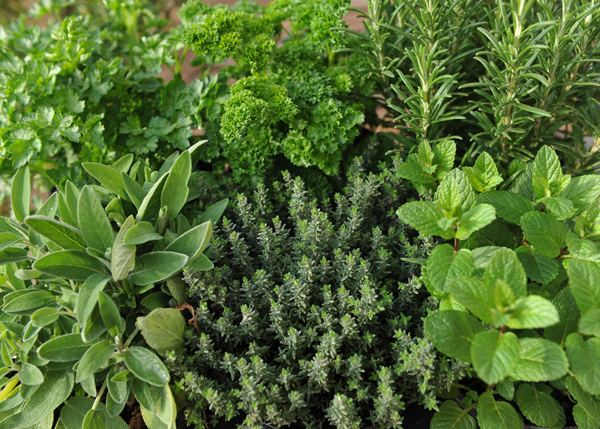 Herb Buy herb collection Herb collection 396 Mixed Herbs39 Delivery by