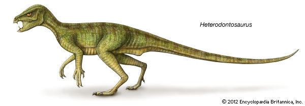 Heterodontosaurus Heterodontosaurus Kids Encyclopedia Children39s Homework Help