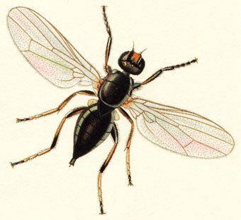 Hexapoda Hexapoda Insecta General Characteristics easybiologyclass