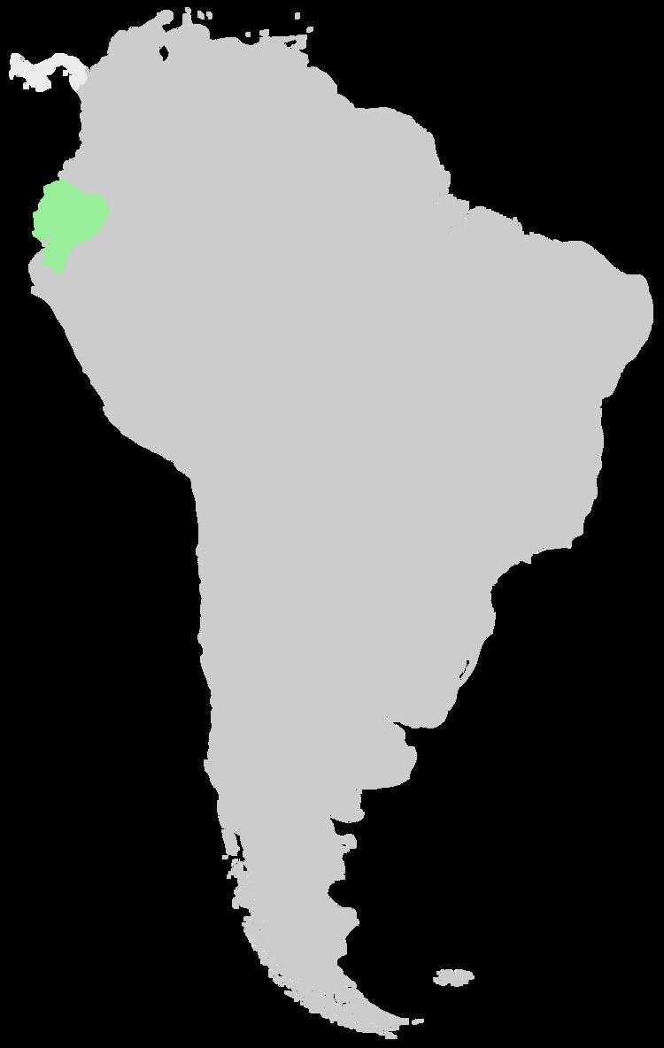 Hieracium coloratum