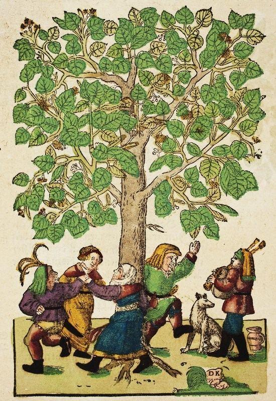 Hieronymus Bock It39s About Time Herbal German botanist Hieronymus Bock
