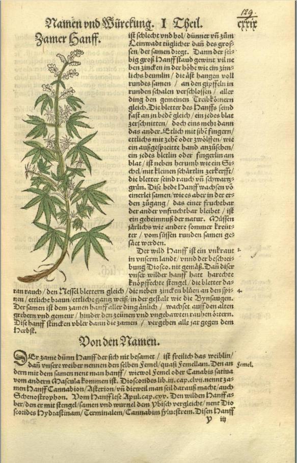 Hieronymus Bock Kreuterbuch Hieronymus Bock 1539 Herb Museum