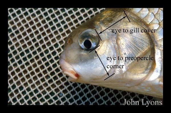 Highfin carpsucker Fish Details