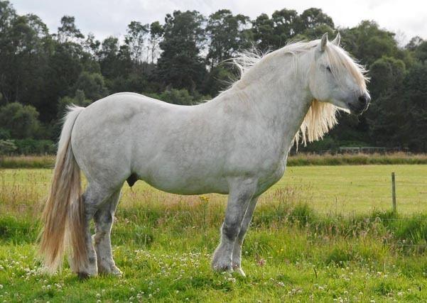 Highland pony Home Page