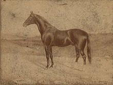 Himyar (horse) httpsuploadwikimediaorgwikipediacommonsthu