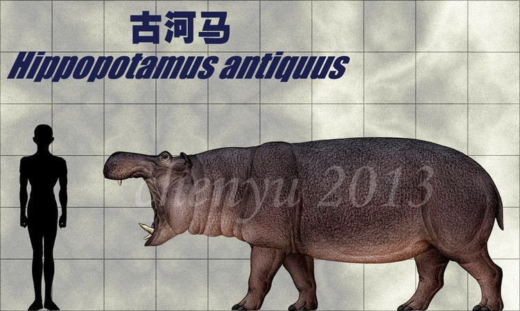 Hippopotamus antiquus Hippopotamus antiquus by sinammonite on DeviantArt