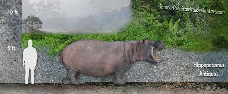 Hippopotamus antiquus Hippopotamus Antiquus by SameerPrehistorica on DeviantArt