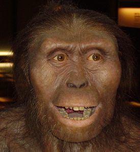 Hominini Palaeos Vertebrates Primates Hominini