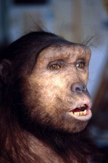 Hominini Kingdom Animalia Phylum Chordata Class Mammalia Order