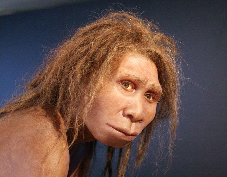 Homo httpsuploadwikimediaorgwikipediacommonsdd