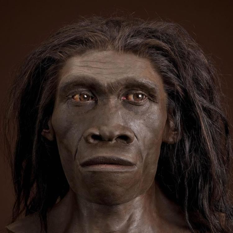 Homo erectus humanoriginssiedusitesdefaultfilesstylesful