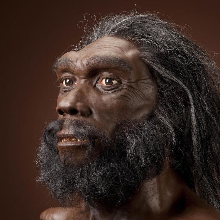 Homo heidelbergensis humanoriginssiedusitesdefaultfilesstylesful