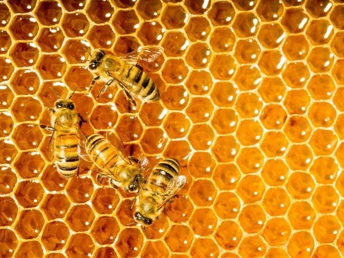 Honey 9 Surprising Benefits of Honey Organic Facts