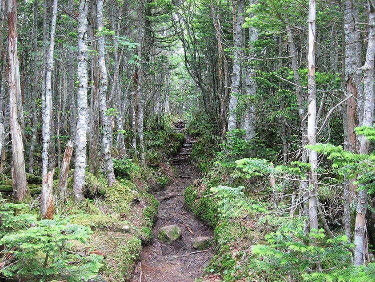Honshū alpine conifer forests