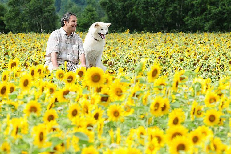 Hoshi Mamoru Inu Remake americano de Hoshi Mamoru Inu Ramen Para Dos