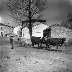 Hrušica, Ilirska Bistrica httpsuploadwikimediaorgwikipediacommonsthu
