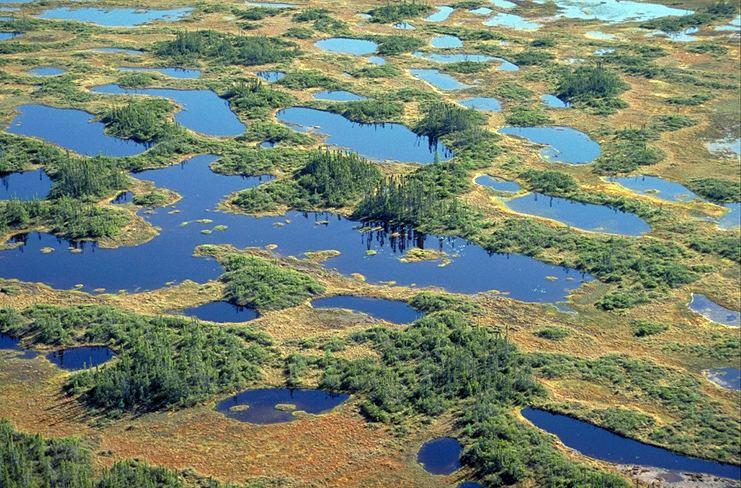 Hudson Bay Lowlands Boreal Forest Biodiversity Hudson amp James Bay Lowlands Bird Canada