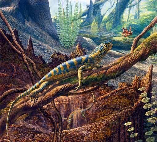 Hylonomus 1000 images about Hylonomus on Pinterest Reptiles Fossils and Nova