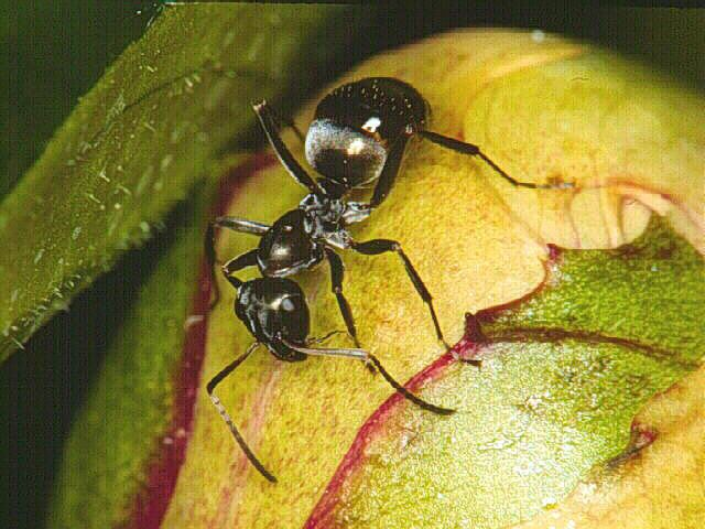 Hymenoptera Introduction to the Hymenoptera