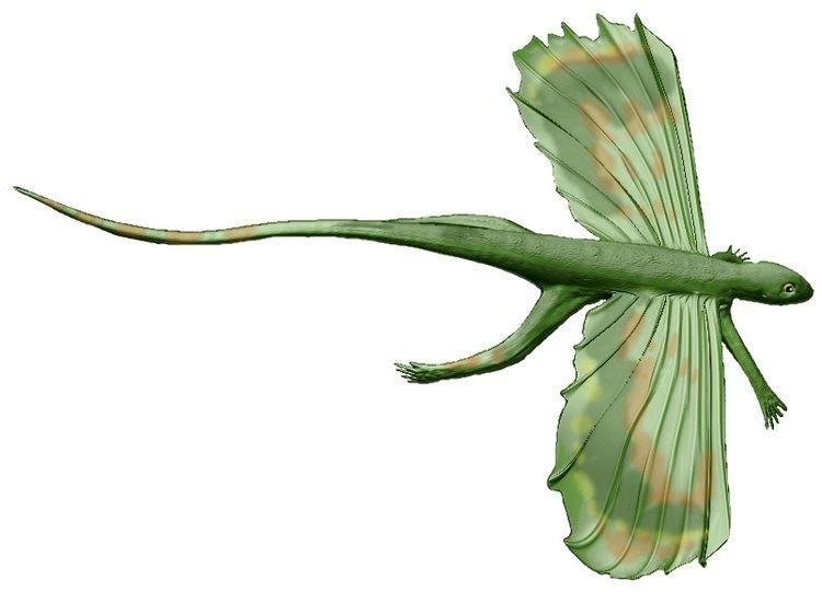 Resultado de imagem para Kuehneosauridae