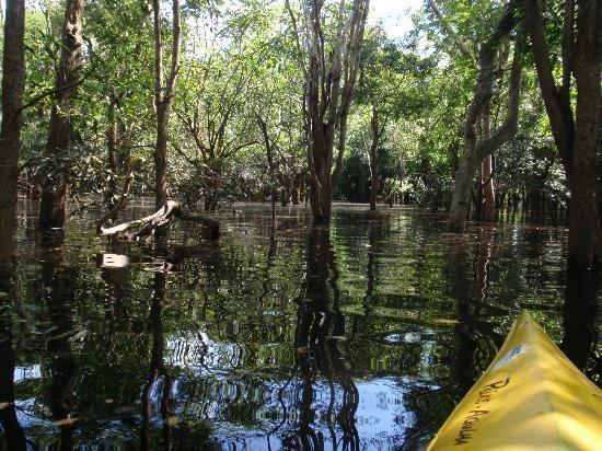Igapó Igap Foto de Amazon Tupana Jungle Lodge Rio Amazonas TripAdvisor