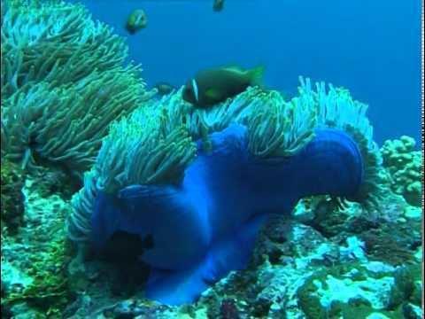 Impressionen unter Wasser Impressionen unter Wasser YouTube