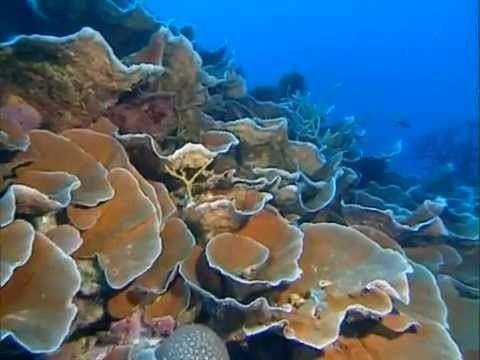 Impressionen unter Wasser Leni Riefenstahl Impressionen unter Wasseravi YouTube